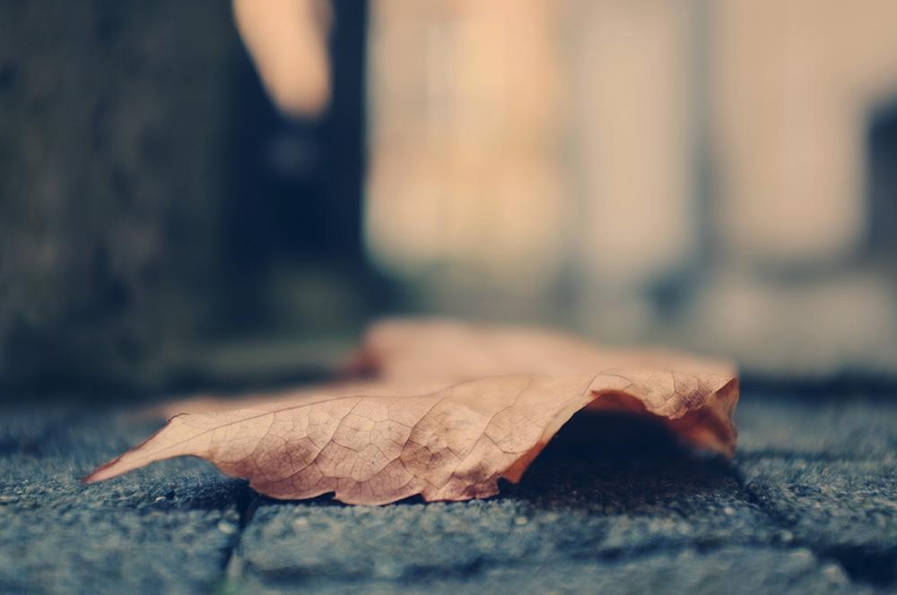 Herbst, welkes Blatt, unscharf, Stimmung, melancholisch, Ende, Veränderung, Foto: Azucena Viloria