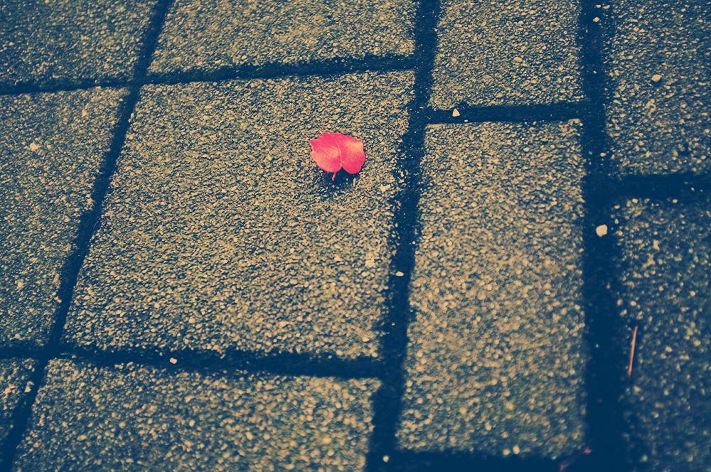 Herbst, welkes Blatt, unscharf, rot, Pflastersteine, Stimmung, melancholisch, Ende, Veränderung, Foto: Azucena Viloria