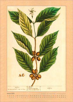 Kalender 2020 Elizabeth Blackwell Curious HerbalJAnuar