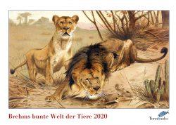 Kunstkalender. Brehms Tierleben Löwen