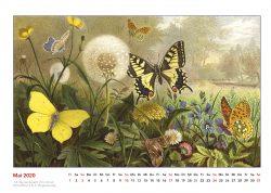 Brehms Tierleben verschiedene Schmetterlinge