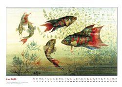 Brehms Tierleben Fische Großflosser