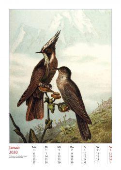 Vogel-Illustrationen aus Brehms Tierleben