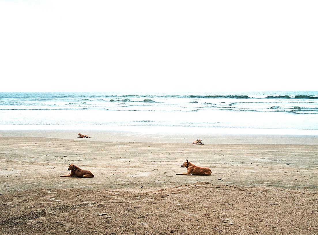 Vier Hunde am Strandvon Palolem